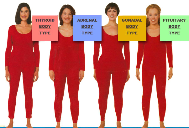 The Body Type System For Women Healthwise Therapies Kathy Penev